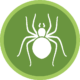 spiders icon