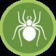 spiders icon